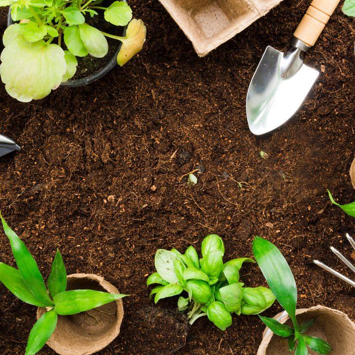 x-top-view-gardening-tools-plants